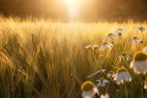 Синоптики о погоде в Ивановской области в выходные: за жарой придет холодный фронт